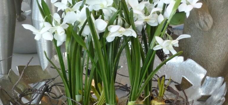 Sehnsucht nach Frühling 2016