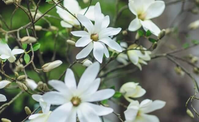 Silk-ka Blumen