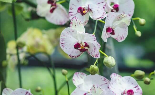 Silkka Blumen